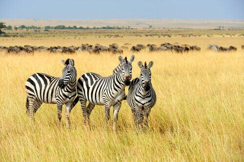 Three African animals.
