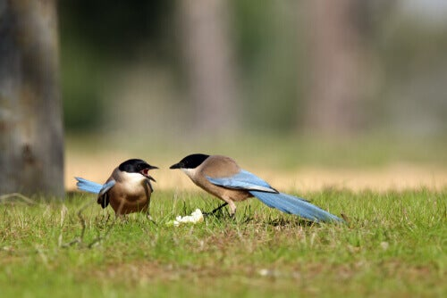 Two birds fighting over food.