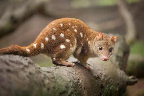 Australian Fauna: Discover the Country's Endemic Animals