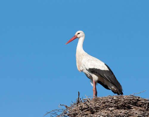 A watchful stork.