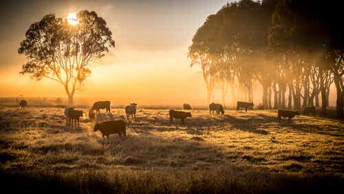 What Is Extensive Livestock Farming?