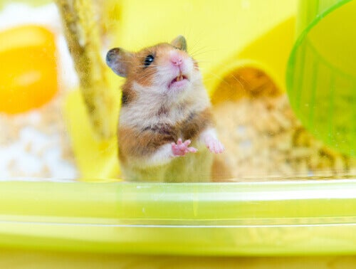 A hamster in its cage.