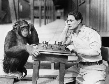 A monkey playing chess.