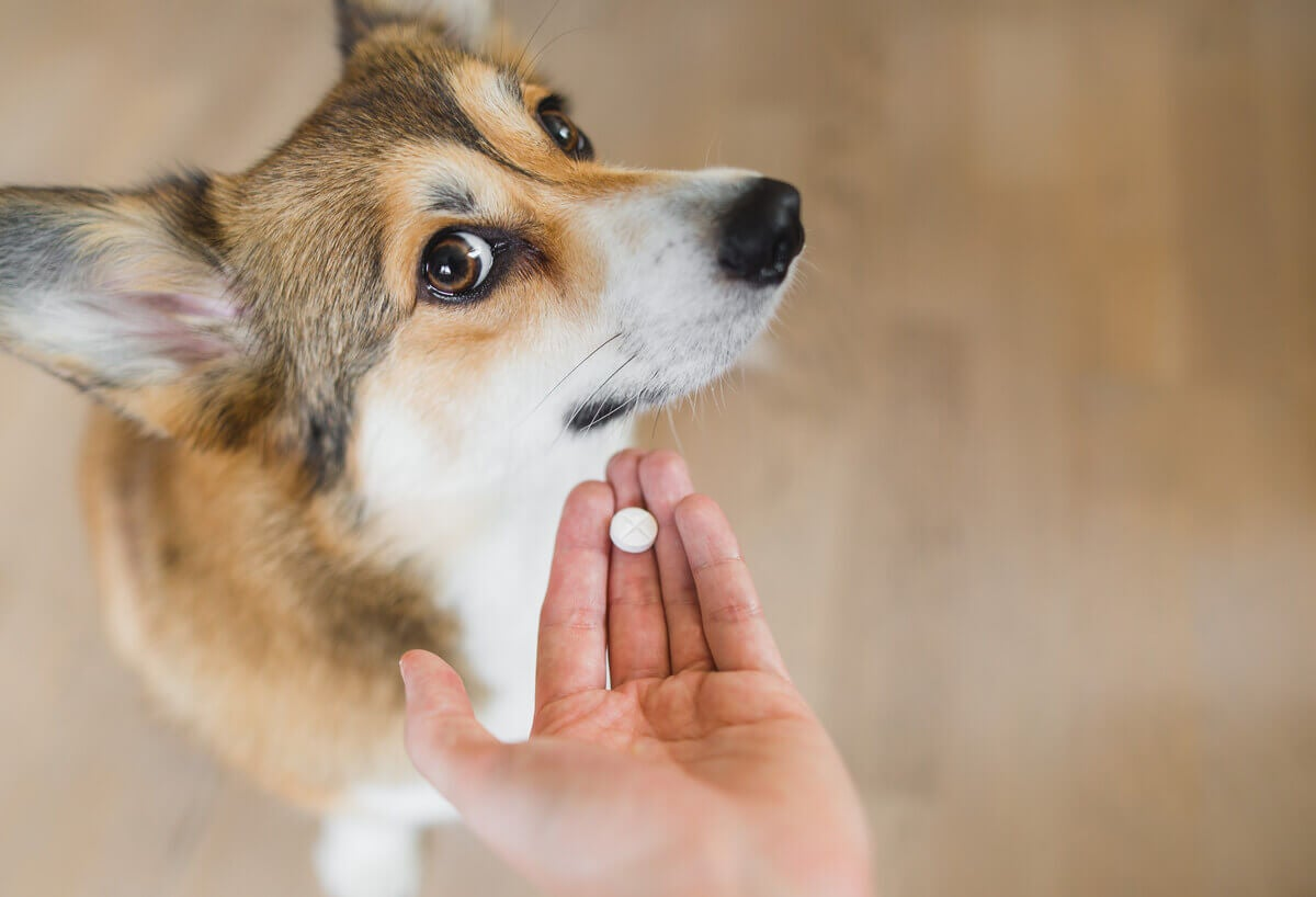 An owner trying to give a dog a pill.