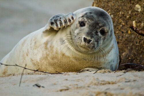 Meet 5 Animals that Live on the Beach