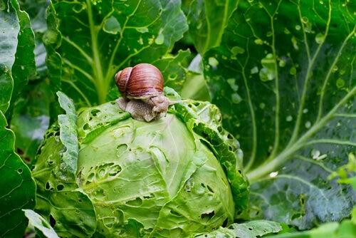 Snail: diet and habitat.