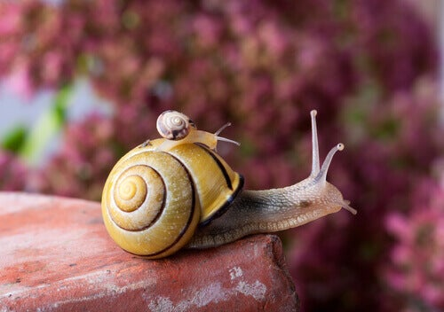 The Life of the Snail - Carrying Its House on Its Back