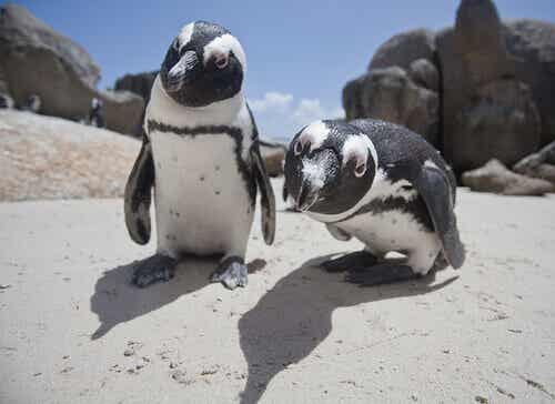 How Many Species of Penguins Are There?