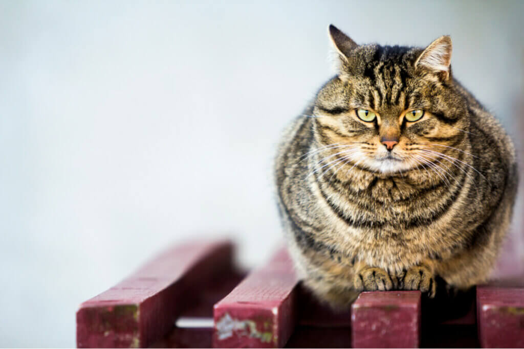 A cat on a bench.