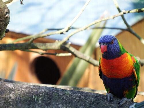 A colorful bird.