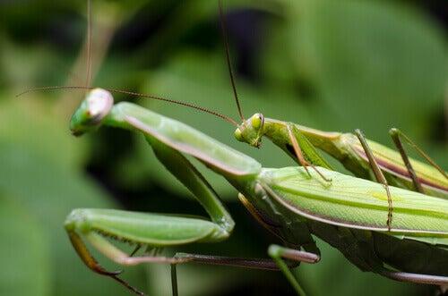 Sexual Peculiarities of Five Animal Species