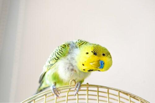 A bird leaning sideways..