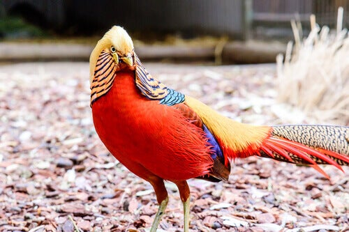 A most colorful bird.