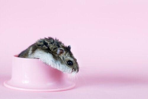 A potty training hamster.