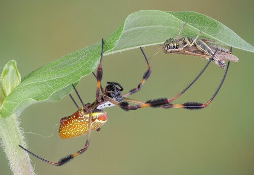 The 5 Most Venomous Spiders