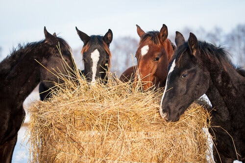 The Essential Nutrients Every Horse Needs