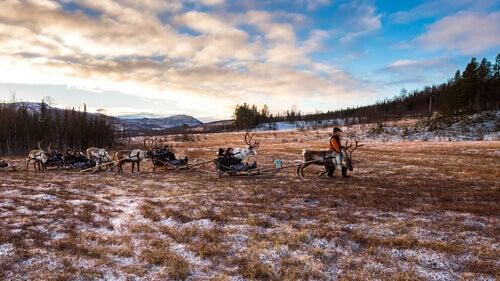 Sami herding reindeer.