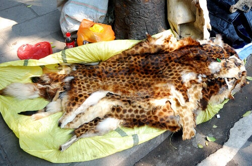 Poaching and illegal wildlife trade.