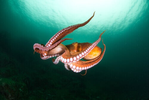 Are Octopuses Aliens?