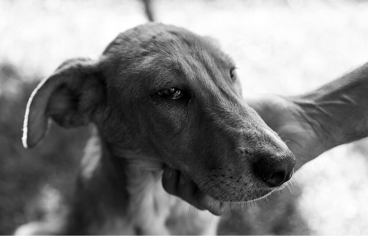 A dog that's near death.