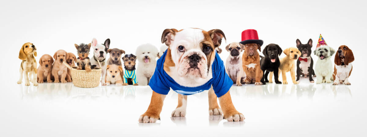 A few dogs dressed up.