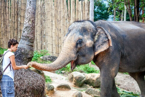 Learn About These 5 Animal Sanctuaries