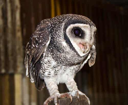 Discover 5 Different Types of Owls
