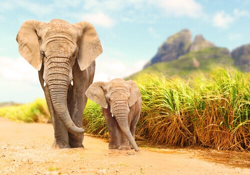 Detecting Earth Tremors To Protect Elephants