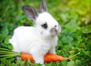 A rabbit with a carrot.