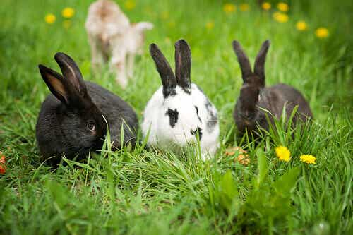 Rabbits Aren't Rodents!