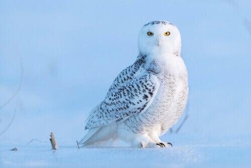 5 True Owl Species