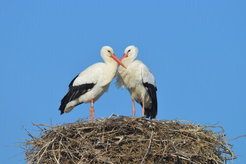 The Stork, a Very Maternal Bird