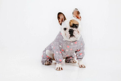 Is Wearing Clothes Comfortable for Dogs?