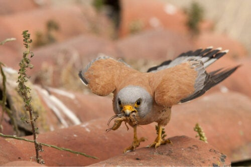 A bird holding a bug.