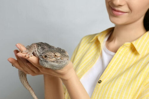 A person holding a reptile.