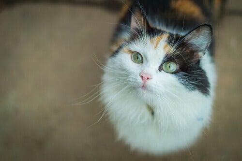 A common European cat.