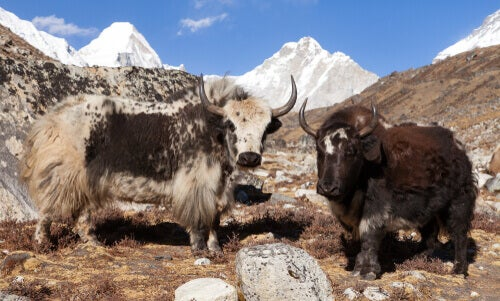 The Great Himalayan National Park: one of the newest national parks of India.