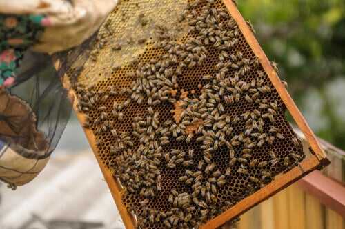 A bee colony.