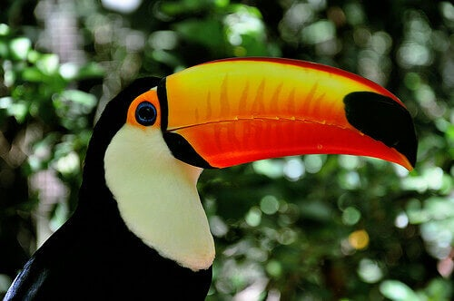 A toucan with a bright colored beak.