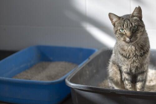 A cat sitting in its litter box.