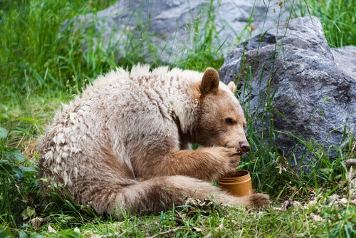 Discover 5 Animals that Eat Honey