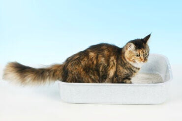 What If Your Cat Sleeps in the Litter Box?