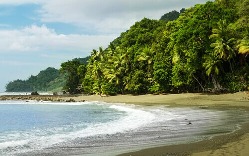 Get to Know the Fauna of Corcovado National Park (Costa Rica)