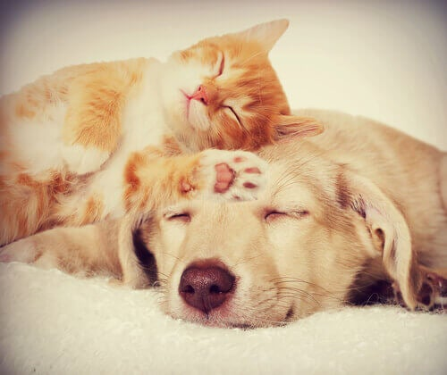 A dog and a cat sleeping peacefully.