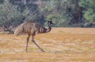 5 Endemic Animals of Australia