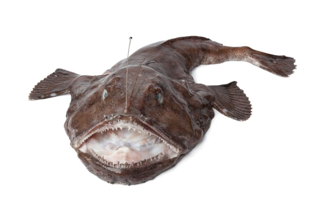 Abyssal Fish, Incredible Sea Creatures