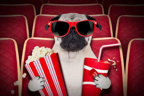 Dog-Friendly Movie Theaters
