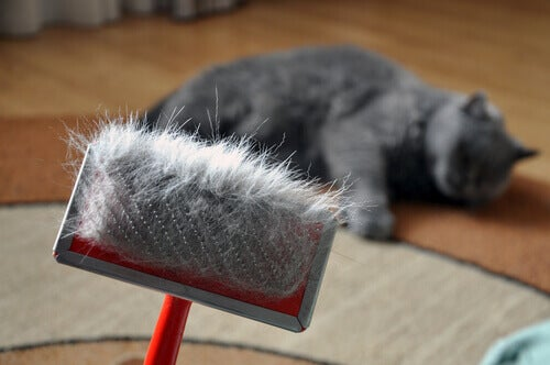 An owner brushing their cat.