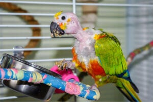 Parrots are animals that can suffer from depression.