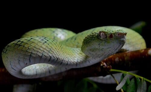 The 5 Most Venomous Snakes